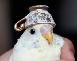 Finch!