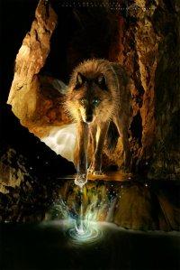 Wolfsin